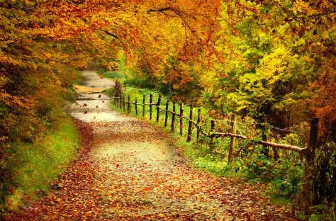 autumn_by_neitheea-d314vc4