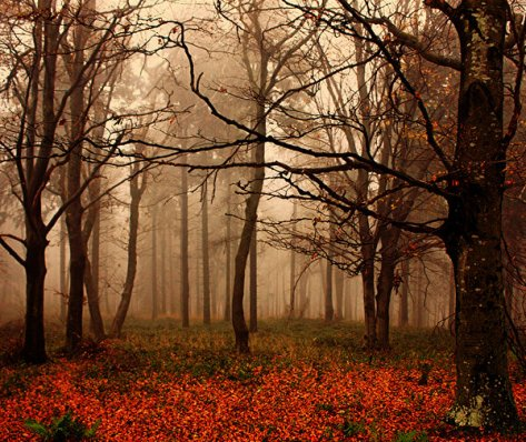 autumn_by_pauljavor