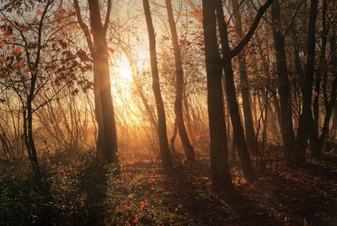 autumn_trees_by_scotto-d3l1drt